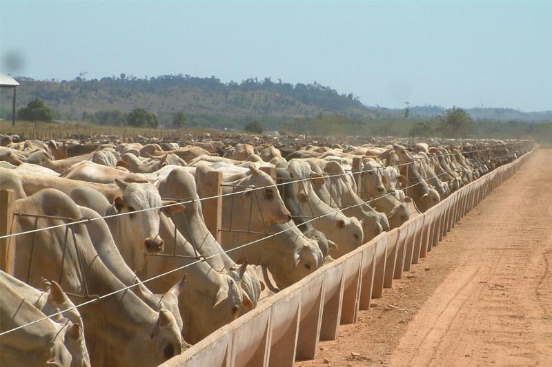 confinamento bovino 2017